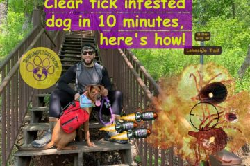 Tick in a dog