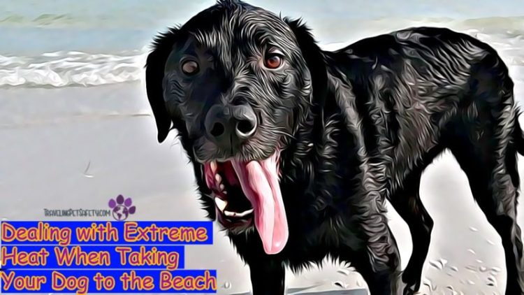 Dealing with Extreme Heat When Taking Your Dog to the Beach