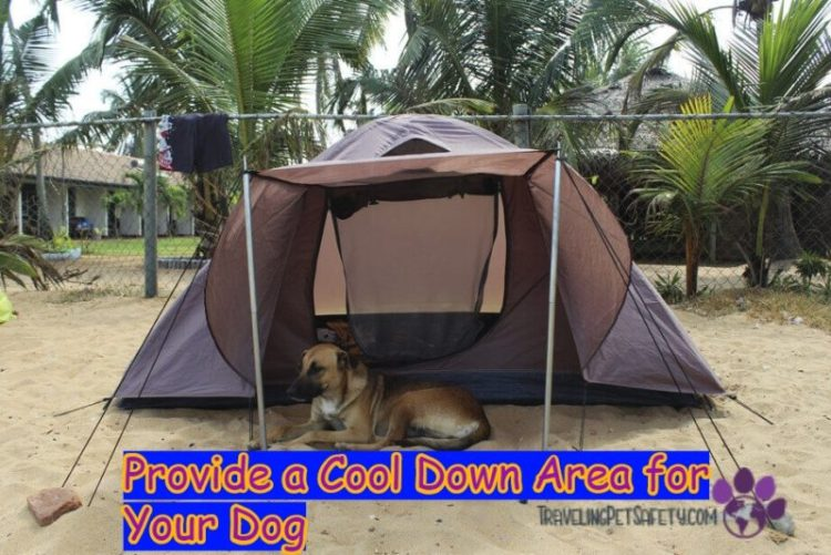 Dog beach florida cooldown area for dogs