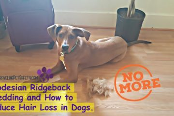Hair Loss in Dogs