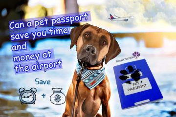 Pet passport Rhodesian Ridgeback