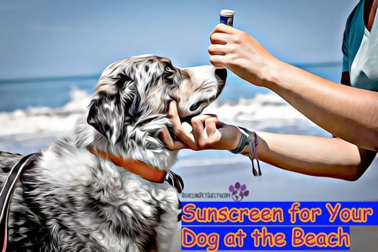 Sunscreen for Your Dog at the Beach
