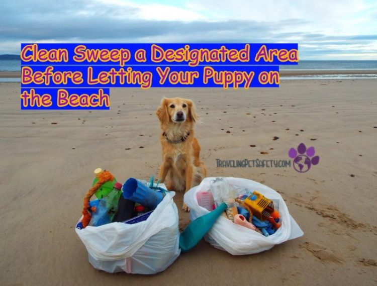 do i need to wash my dog after the beach clean sweep