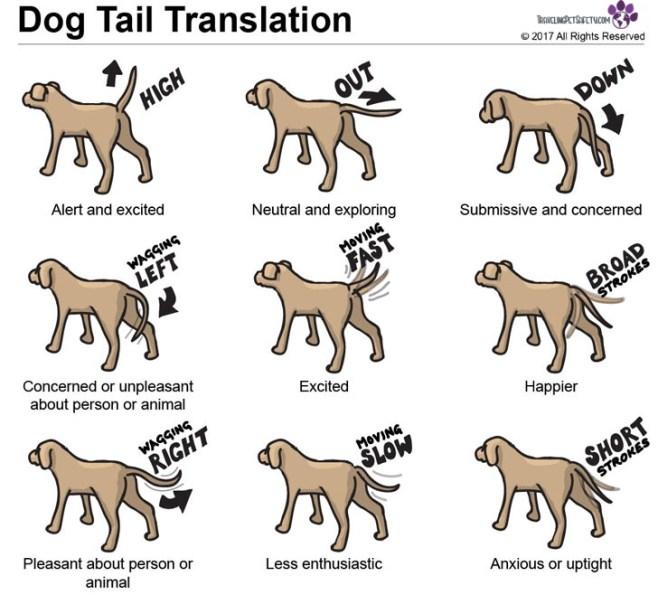 off leash dog tail language