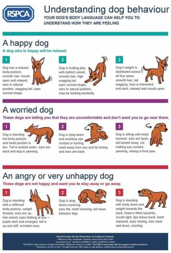 Loose dogs body language