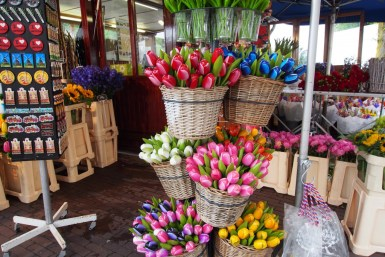 Unechte Tulpen in Amsterdam