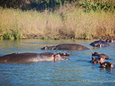 Hippopotamus, St. Lucia Estuary, South Africa