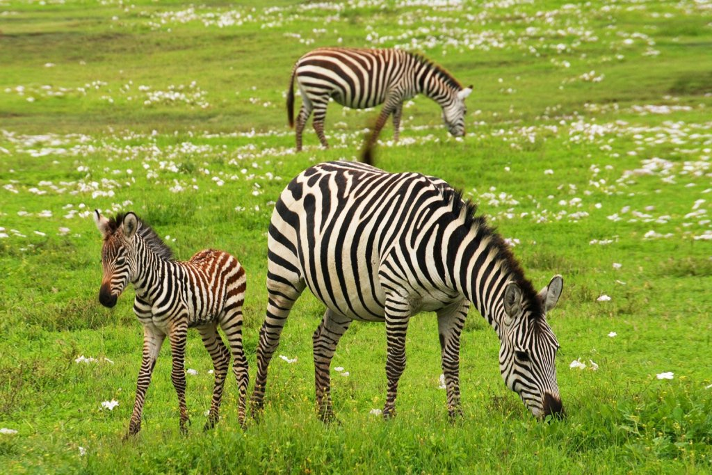 Klipriviersberg Nature Reserve Hiking Trail