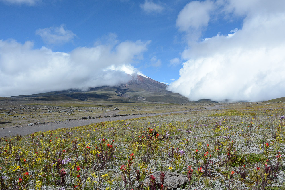 Traveling the World Ecuador Anden Cotopaxi Nationalpark