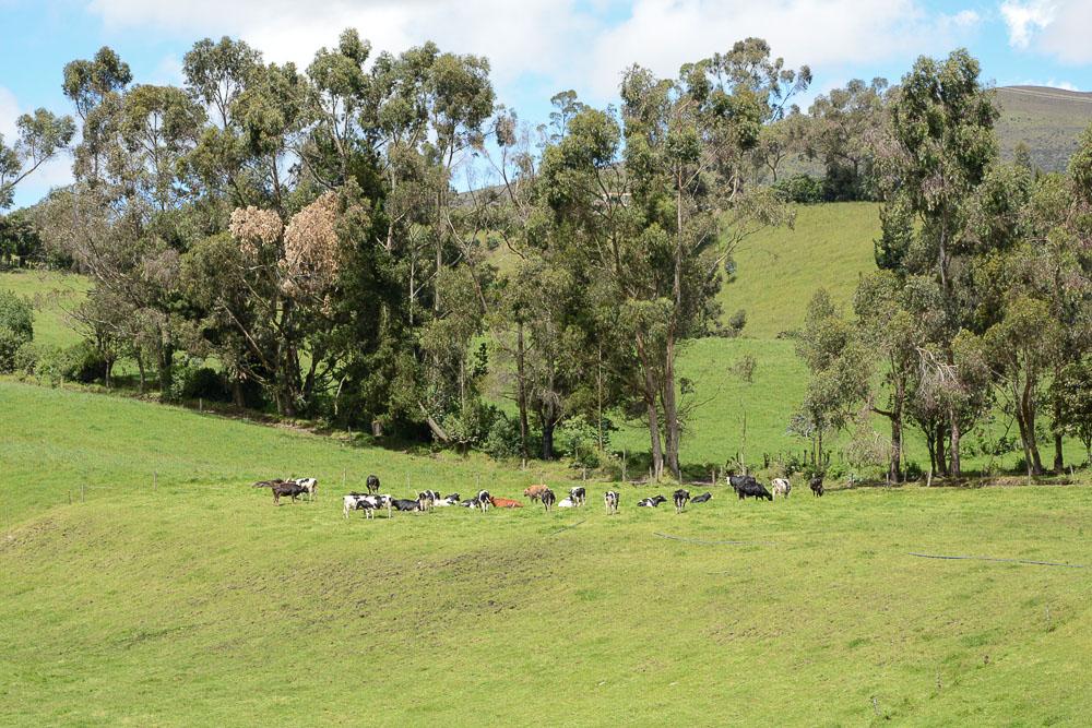 Traveling the World Ecuador Anden Cotopaxi Nationalpark Machachi