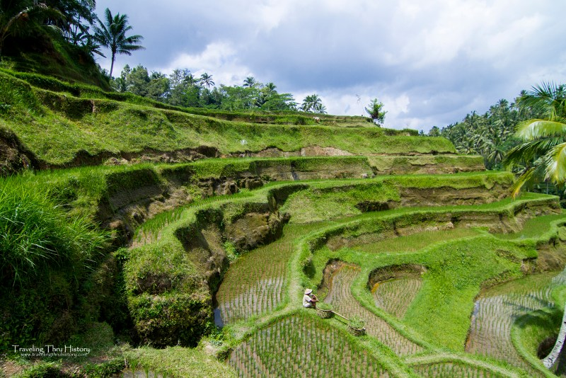 The Tegallalang Rice Terraces are part of the Subak System style of terraced rice fields on the island of Bali in Indonesia. This system has been around since the 8th century and has been designated a UNESCO World Heritage Site.