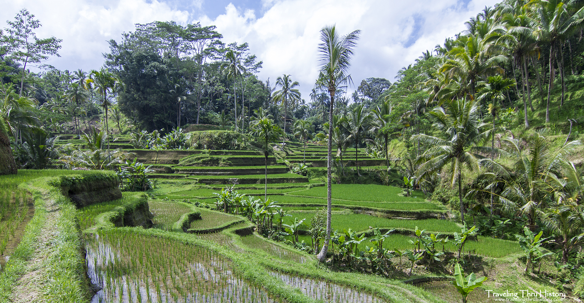 photo essay the terraced rice fields of bali we were under the impression that there was only one area where the terraced rice fields were and thought it was further away