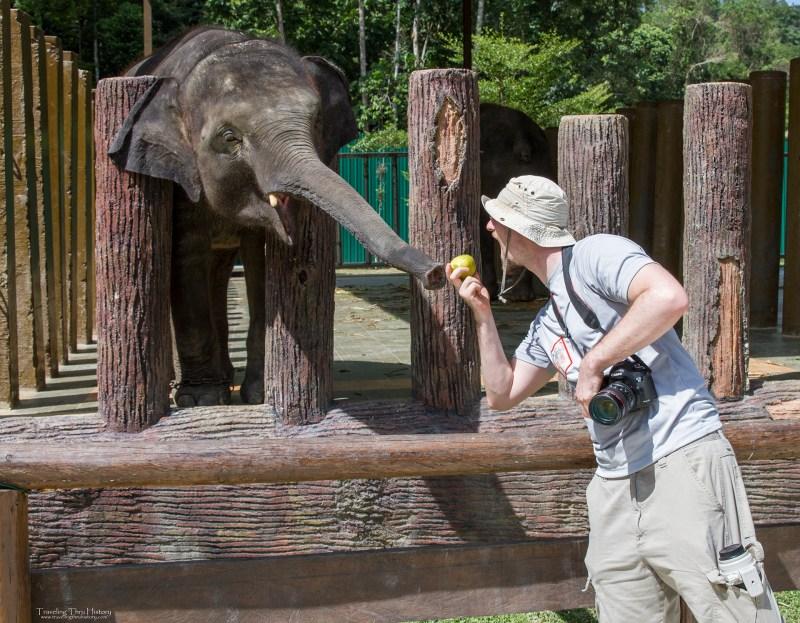 Kuala Gandah Elephant Sanctuary_72t