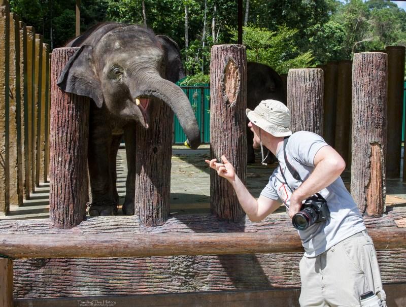 Kuala Gandah Elephant Sanctuary_74t