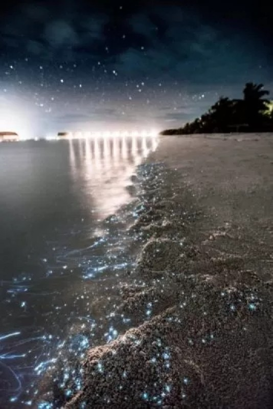Sea of stars Maldives 2 e1561097630618 - Sea Of Stars Vaadhoo Island, Maldives
