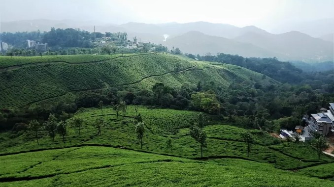 munnar Tourist Places In Kerala 678x381 - Top 10 Tourist Places In Kerala To Visit During Summer