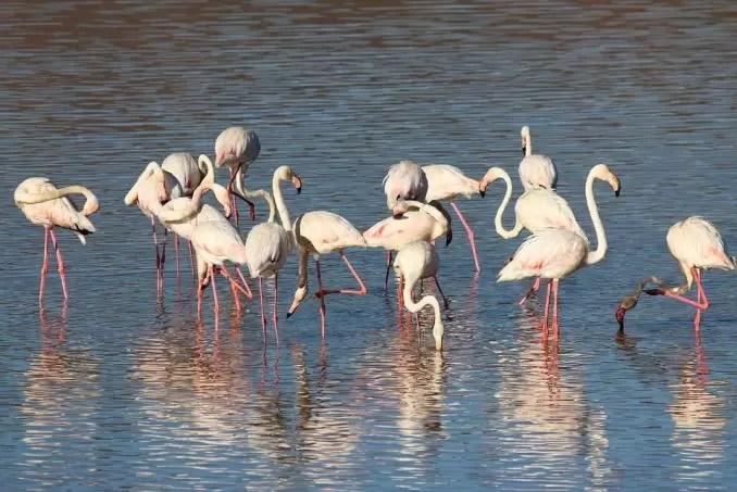Coto de Donana wildlife site e1554751368531 - Seville Tourist Guide | Best Places To Visit in Seville, Spain