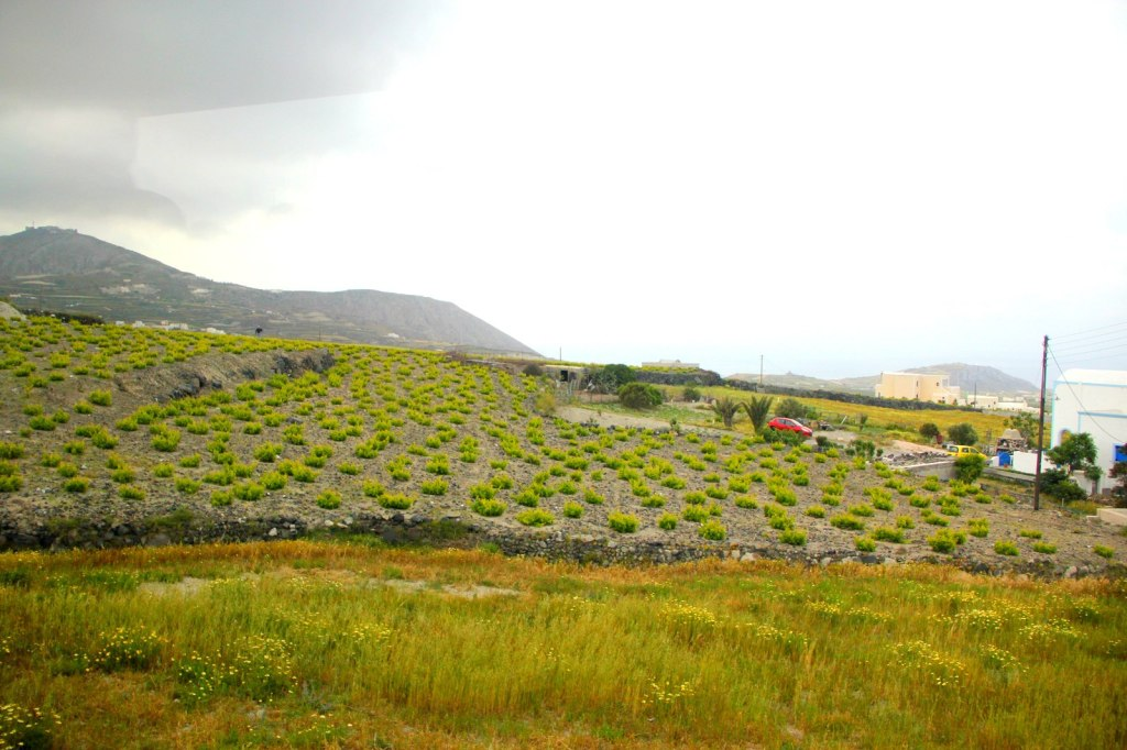 Crops and agriculture in Santorini