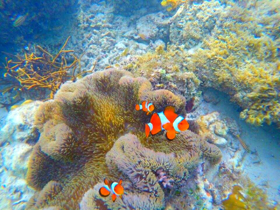 Finding Nemo at Cadlao Island
