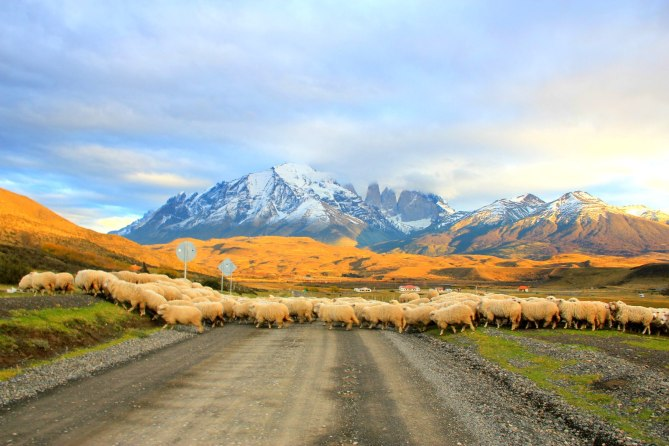 Rush Hours at Torres del Paine, Chile
