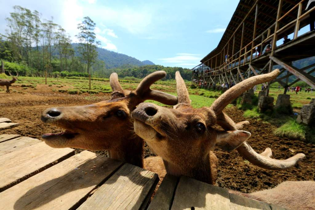 Ranca Upas Deer Farm