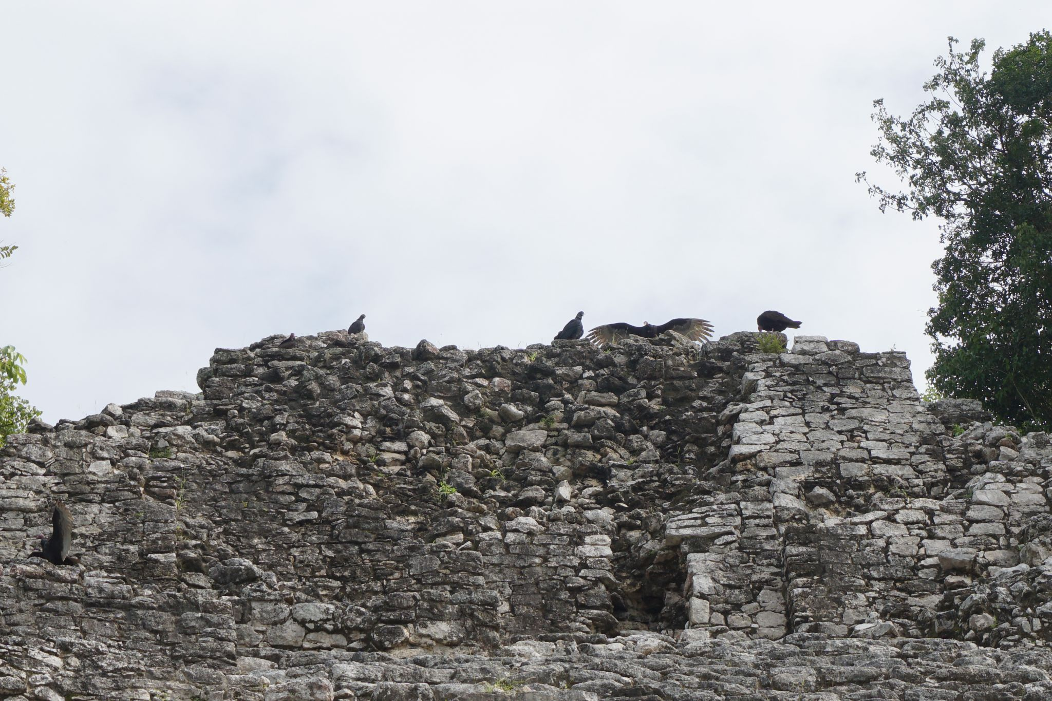 Eagles on top of Iglesia in Coba