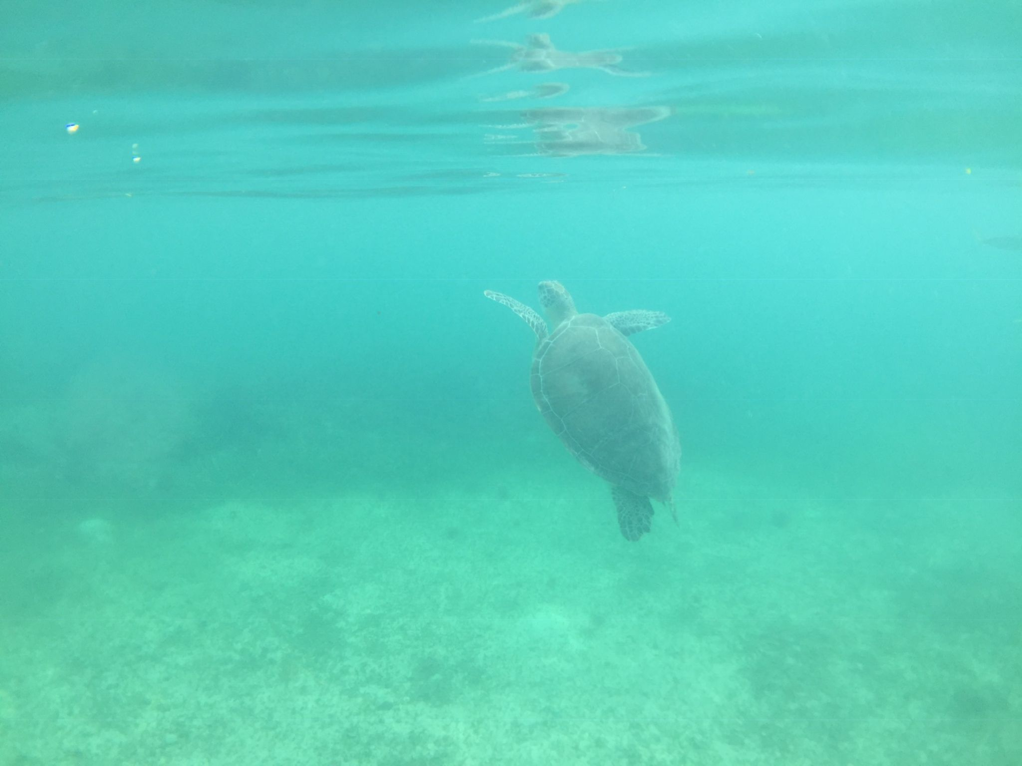 Snorkelling with turtles in Mexico