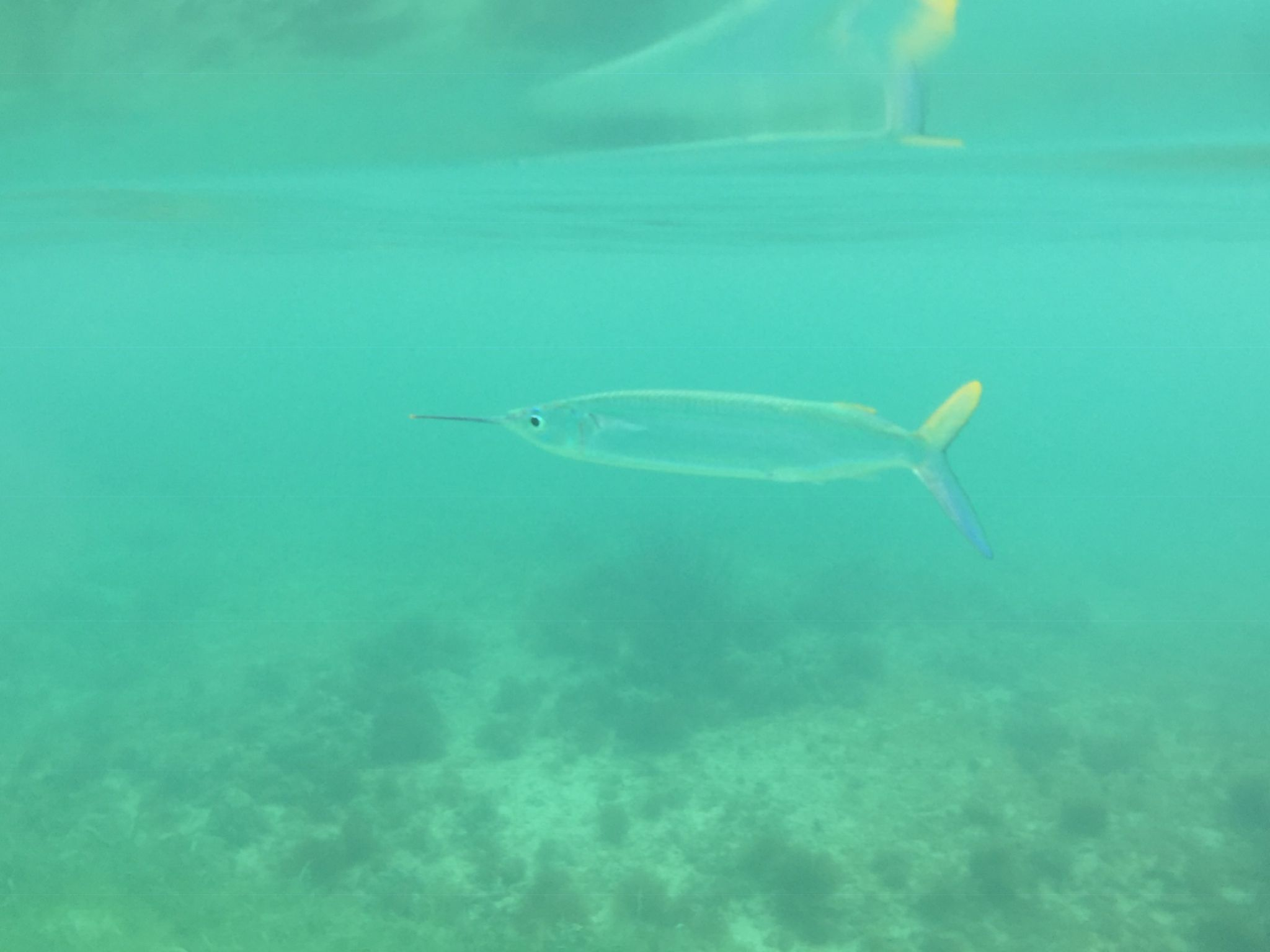 Fish at Akumal Beach