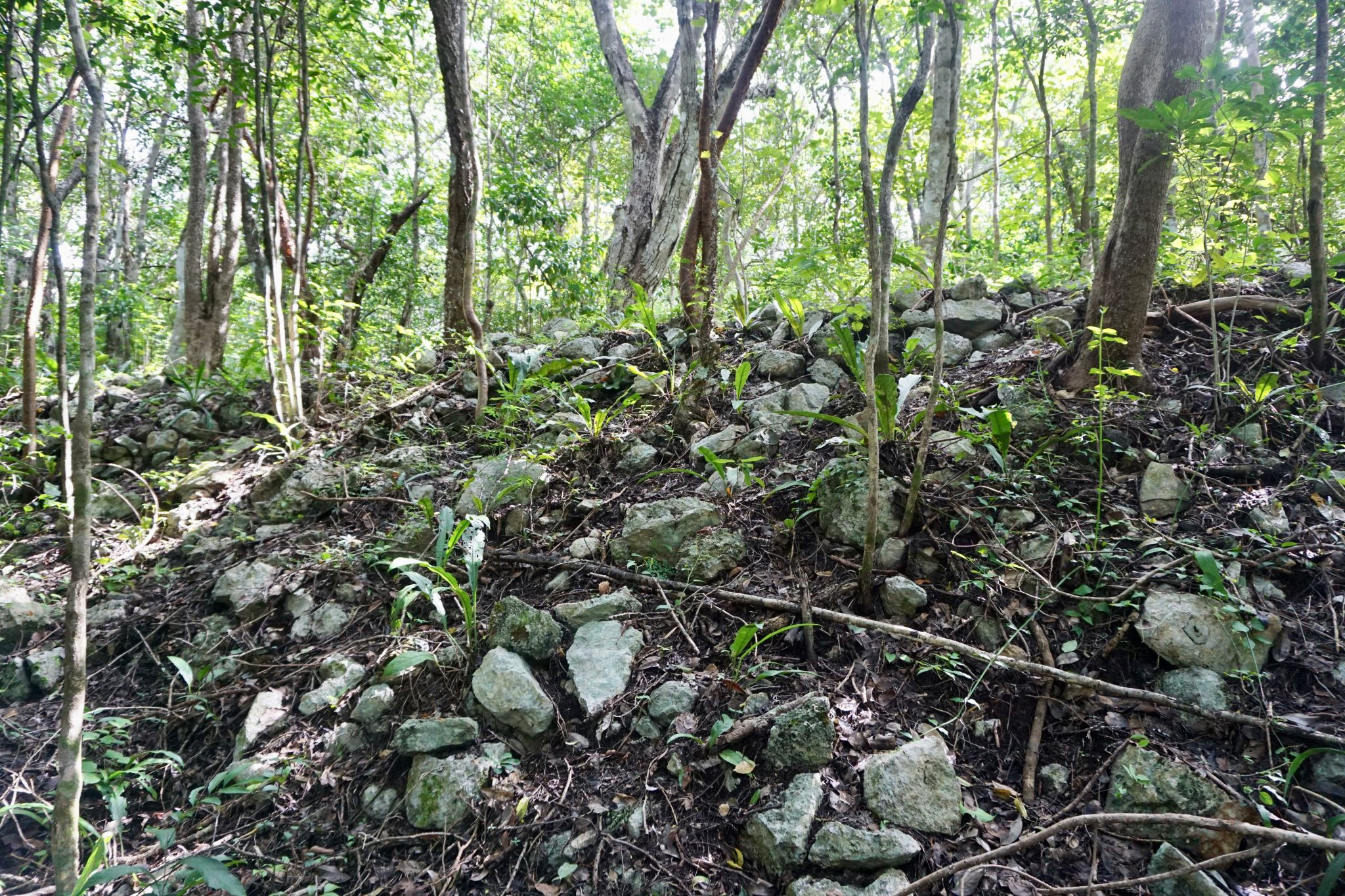 Visiting Cobá comes with the added bonus of a Mexican jungle experience