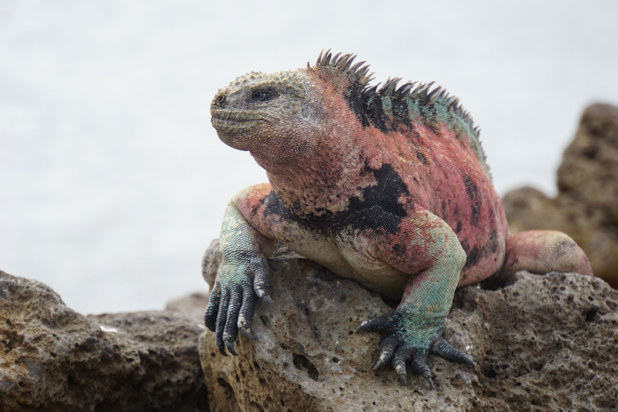 What animals to see on the Galápagos islands.