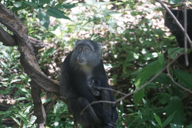 Monkey in Lake Manyara National Park