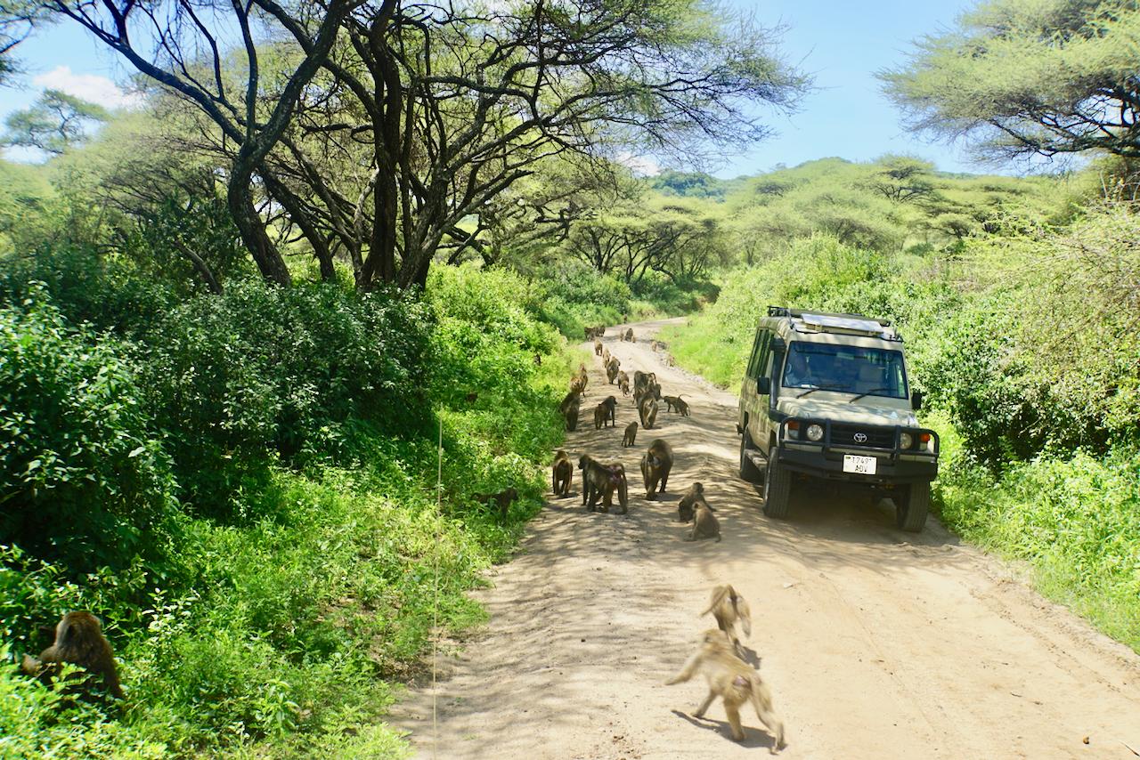 Baboons in Lake Manyara National Park