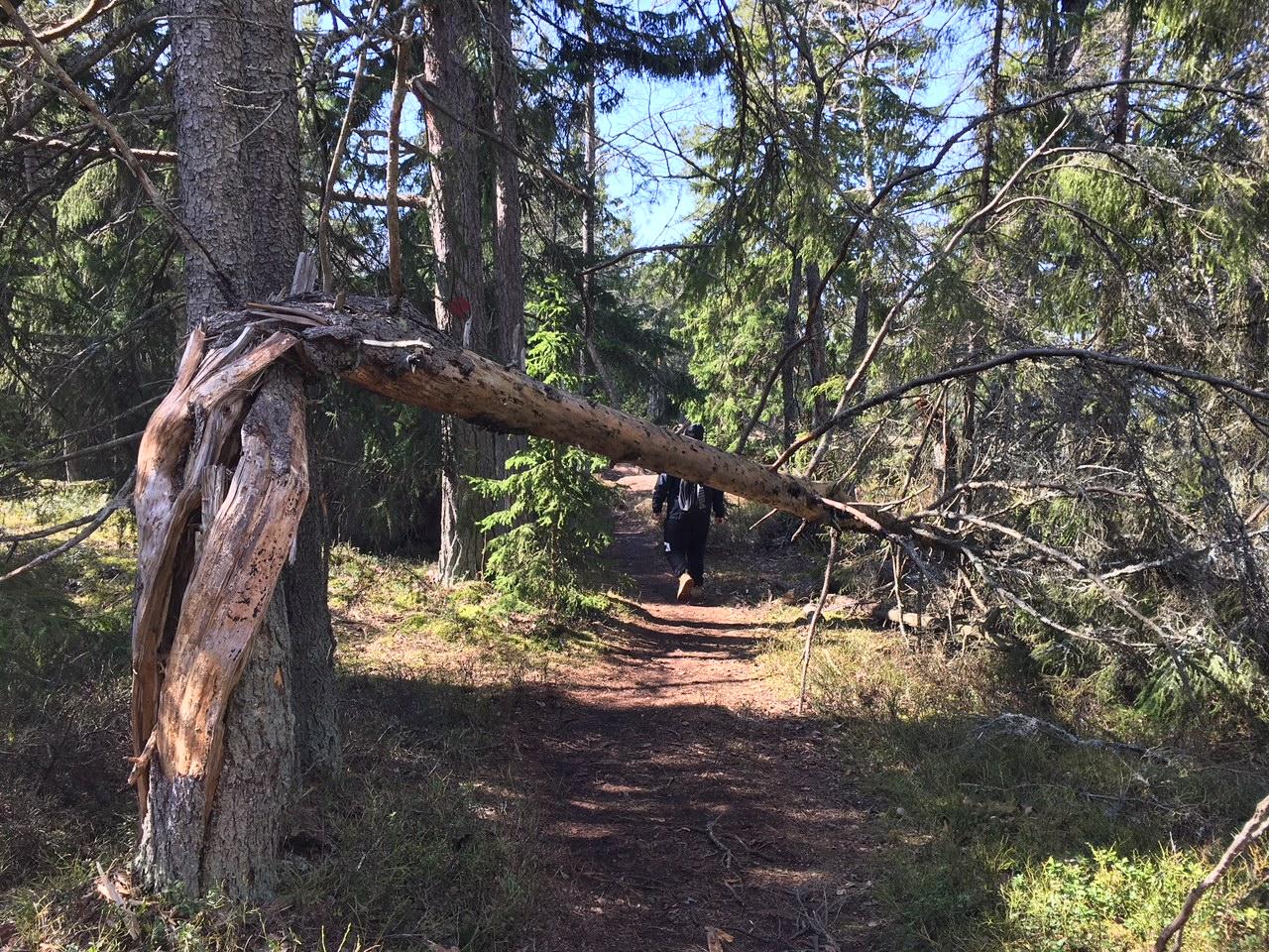 How to go hiking in Porkkalanniemi