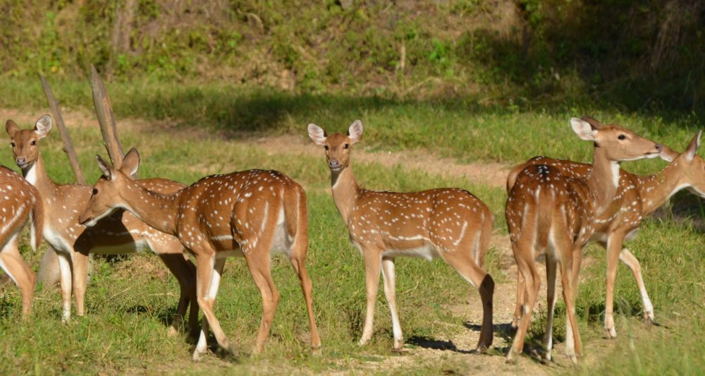 Dudhwa National park by Travel Jaunts