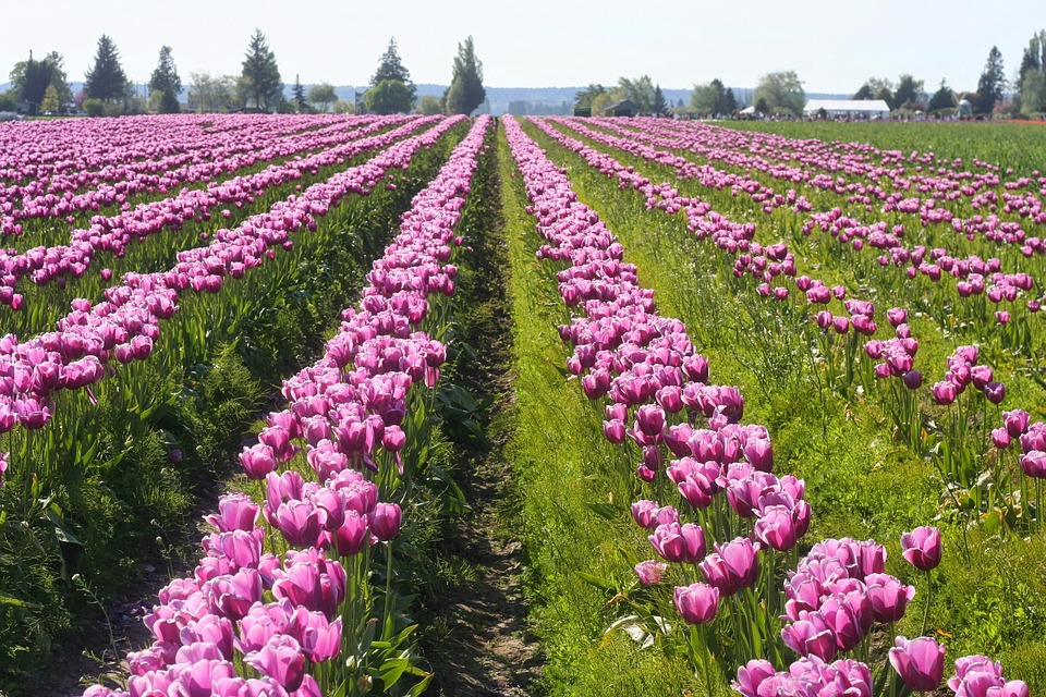 Skagit Valley,Washington