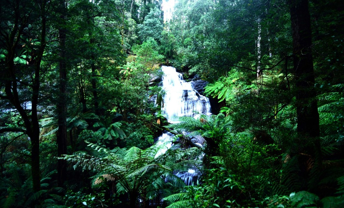 Daintree Rainforests Australia by Travel Jaunts