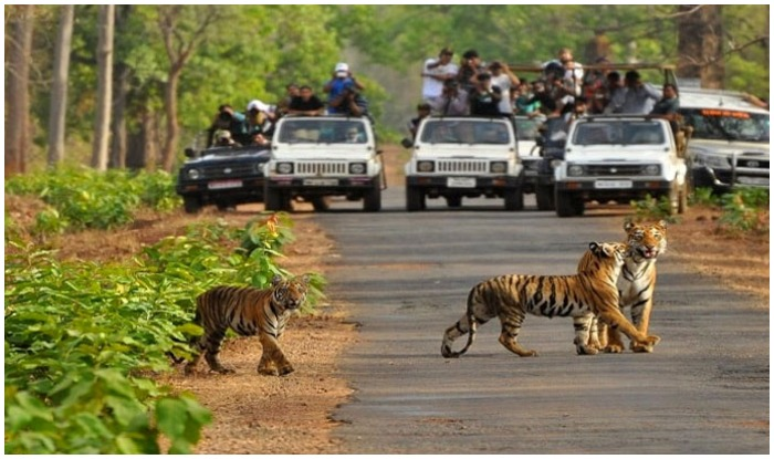 Rajaji National Park, Rishikesh, Uttarakhand, Tickets and Entries,, Uttarakhand Tourism Development Board, Jungle Safari, Shivaliks, Rajaji, Motichur and Chila, Chilla Barrage, Pashulok Barrage, Jhilmil Jheel