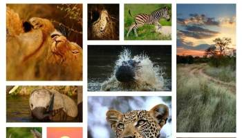 10 most famous wild life century of India