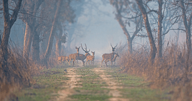 dudhwa tiger reserve will open for tourists from 1st november
