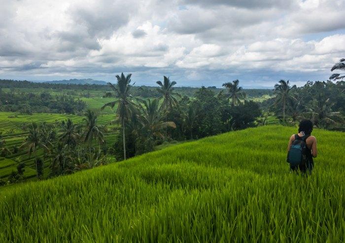 jatiluwih rice terraces fields in bali