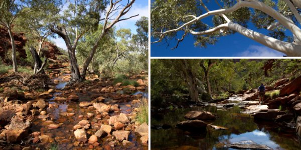 kings canyon tour