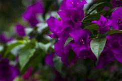 Botanic Garden Kandy 6
