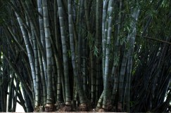 Botanic Garden Kandy 5