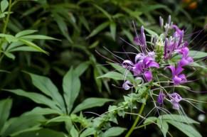 Botanic Garden Kandy 3