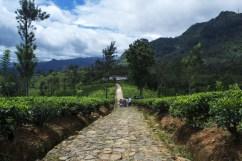 Piantagioni Sri Lanka 3