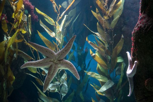 stella marina Oceanario Lisbona