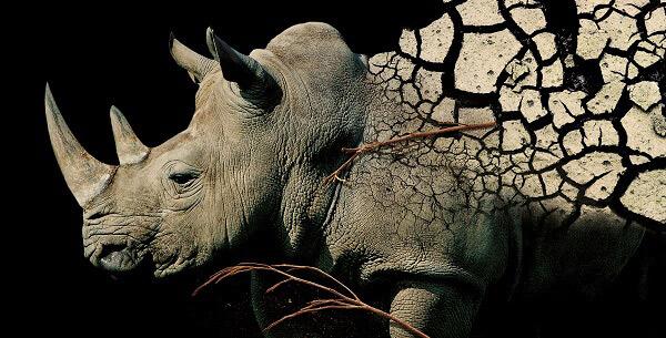 zoom torino rinoceronte