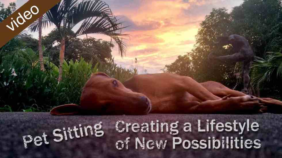 Petsitting: Creating A Lifestyle Of New Possibilities