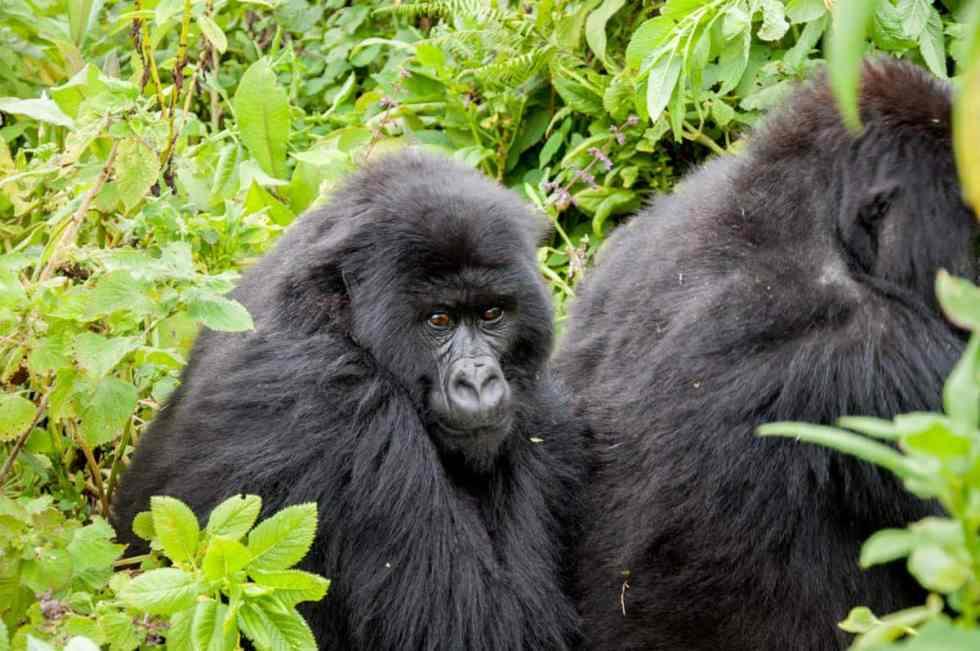 Dian Fossey Gorilla Reserve