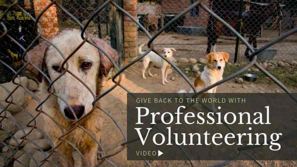 Give Back To The World With Professional Volunteering (VIDEO)